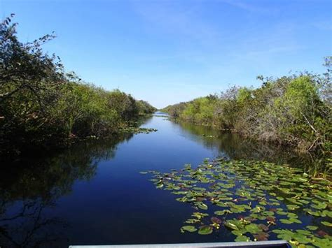 sw boat everglades view from boat foto de everglades river of grass