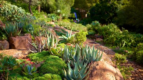 Walter Sisulu Botanical Gardens Gardens Parks Pictures View Images Of Africa And Indian