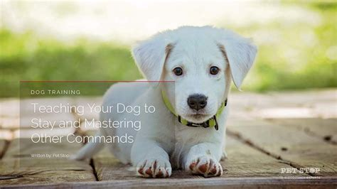teach puppy to stay 3 commands for a happier pet stop 174 fence company