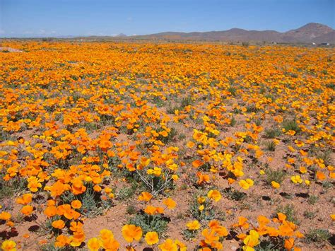 desert flowers be to me diary of a mystic