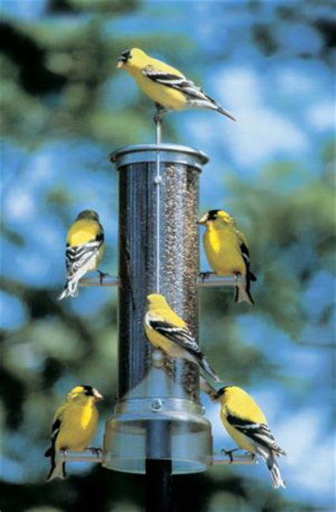 backyard bird feeding at songbirdgarden com