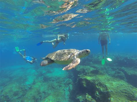 for snorkeling snorkel from your gulet on turkeys lycia coast