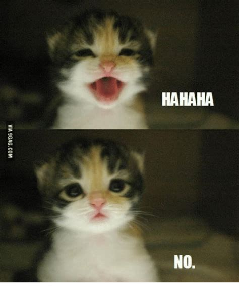 No Cat Meme - 25 best memes about hahaha no cat hahaha no cat memes