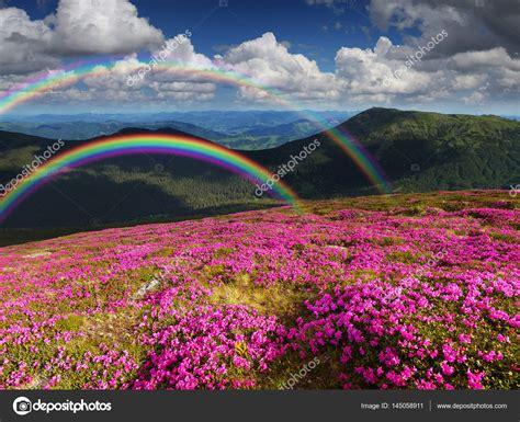 paesaggi di fiori paesaggio di estate con fiori di montagna e un arcobaleno