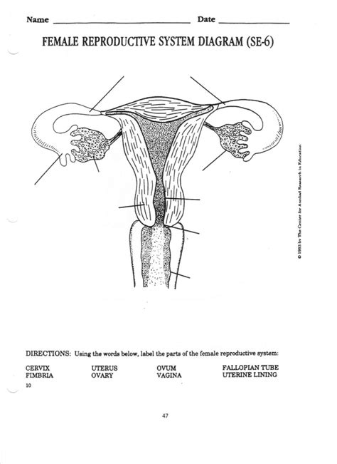 Endocrine And Reproductive System Worksheet Answers Free