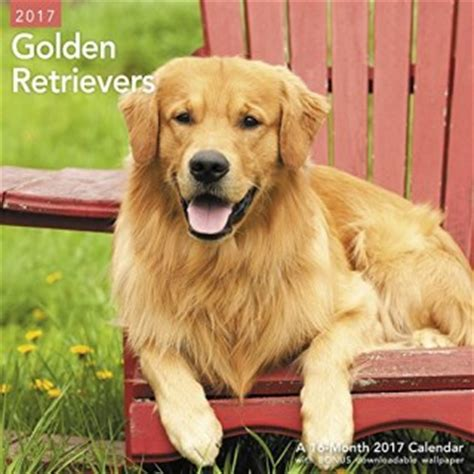 golden retriever puppies for sale in illinois golden retriever breeders in illinois freedoglistings
