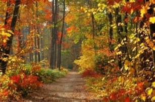 colors of fall summer weather could fall colors pop in northeast u s