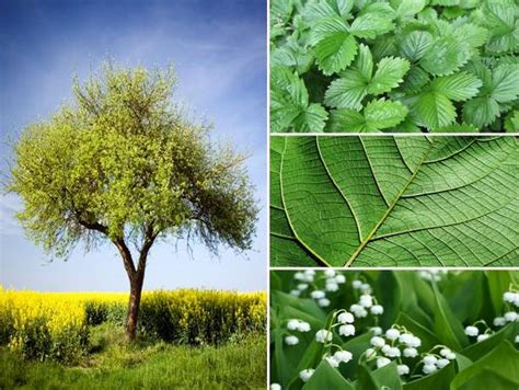 Trees Symbolism by The Meaning And Symbolism Of The Word Vegetation