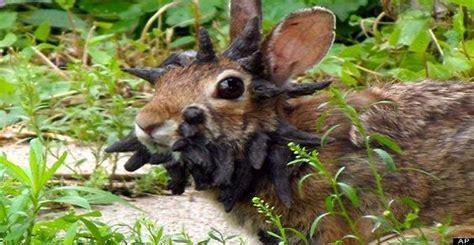 coniglio nano in giardino frankenstein il coniglio pi 249 pauroso mondo ma ha un