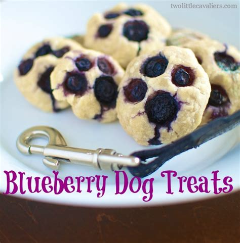 blueberries for dogs muddy paws blueberry treats recipe blueberries