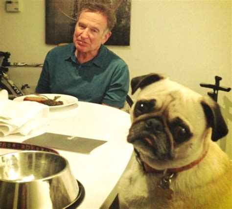robin williams pug pictures who pugs robin williams pug