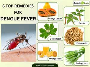 fever home remedies home remedies for dengue fever organic facts