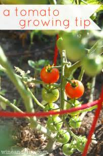 how does your garden grow 10 easy tips for a successful