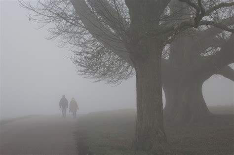 day in foggy day in tatton park cheshire all creatures
