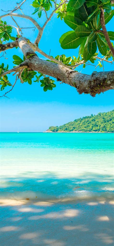 wallpaper beautiful sea beach tree tropical  uhd  picture image