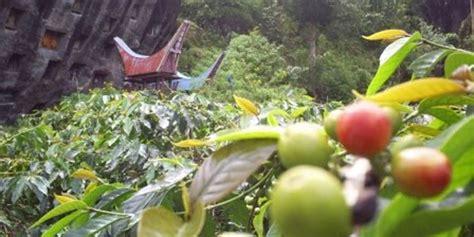 Kopi Aroma Toraja By Bdg Coffee mencintai kopi nusantara berarti turut melestarikan kopi