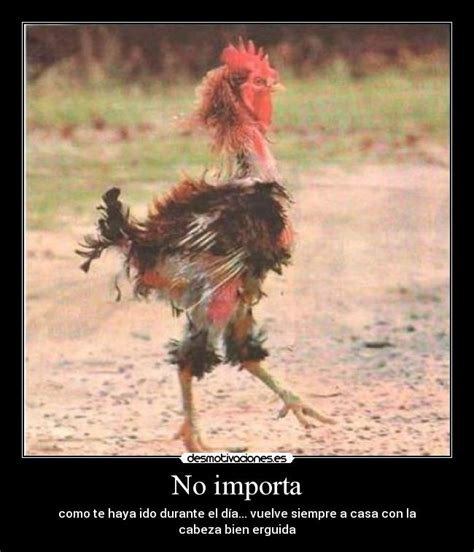 imagenes de gallos con frases newhairstylesformen2014 com imagenes de gallos con frases graciosas carteles de gallo
