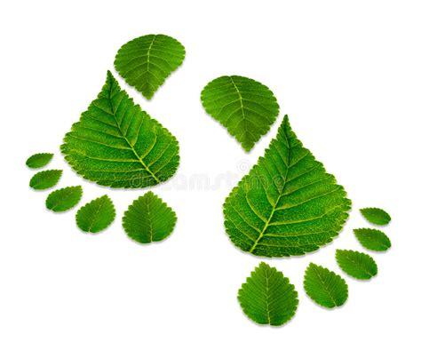 imagenes huellas verdes dos huellas verdes aisladas en blanco foto de archivo