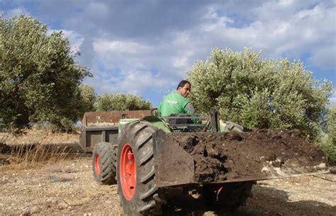 concime per olivo in vaso concime per piante di ulivo concimazione potatore di ulivo