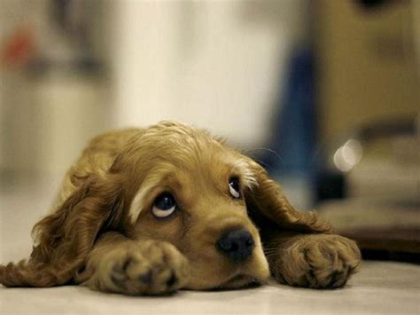 sad puppy sad puppies help oneplus forums