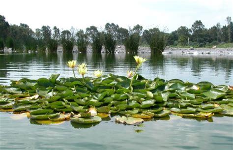 imagenes de jardines botanicos en mexico fundaci 243 n xochitla noticias el jard 237 n bot 225 nico de