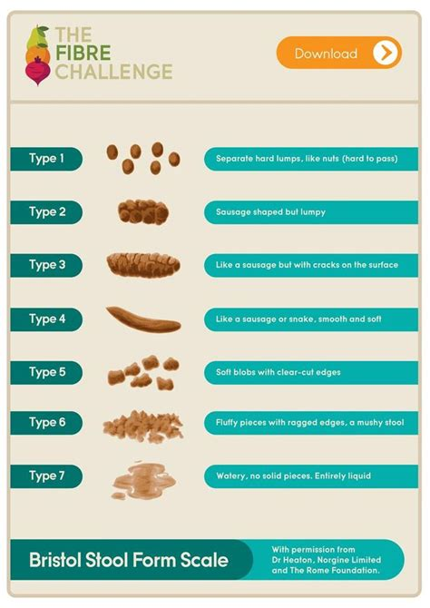 what does your poo look like bristol stool form scale