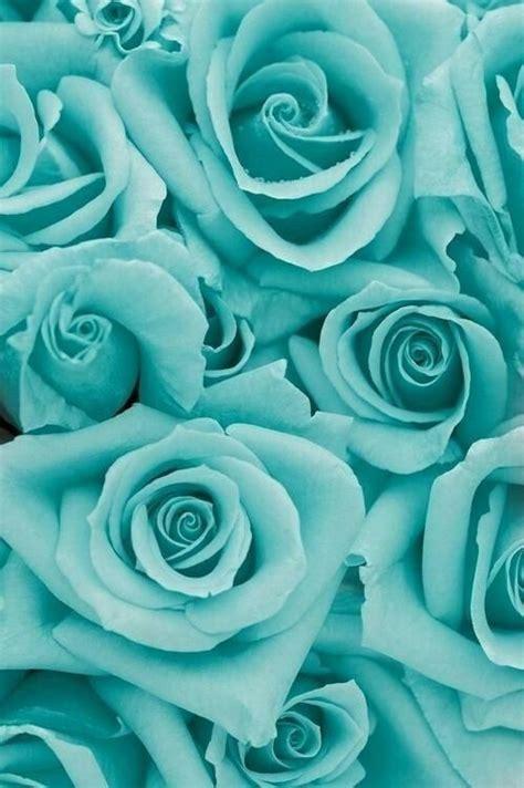 tiffany blue roses phone wallpaper pinterest blue