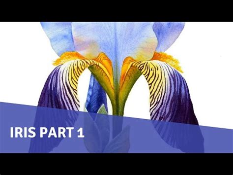 watercolor tutorial part 1 py65 videolike