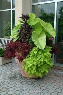 crabapple landscapexperts potting soils for container gardens