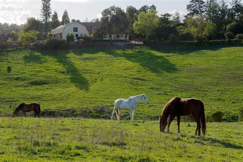 round los altos ca los altos hills california wikipedia