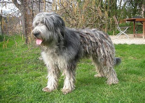 hunde decken hunde tierheim schlosser hunde decken lassen