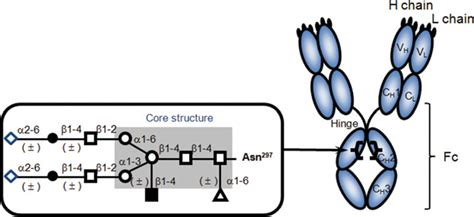 the current status and prospects of antibody engineering