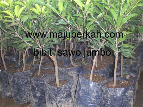 Jual Pupuk Hidroponik Banjarmasin jual bibit tanaman obat keluarga tanamanbaru