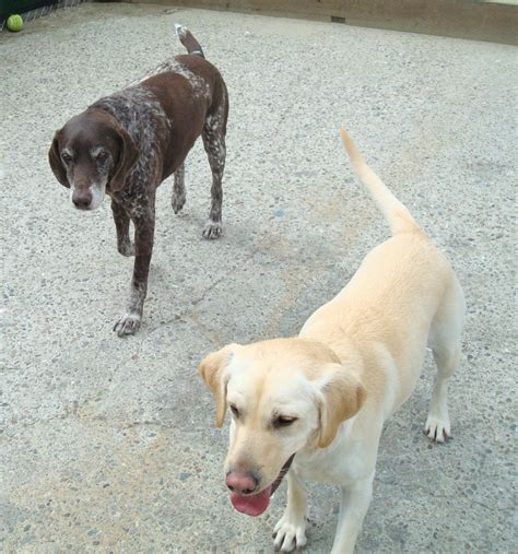 delta dogs delta c photo gallery