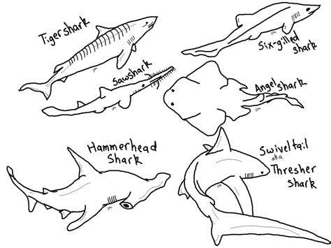 shark coloring pages free printable hammerhead shark coloring pages to print