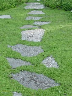 1000 ideas about moss on ground