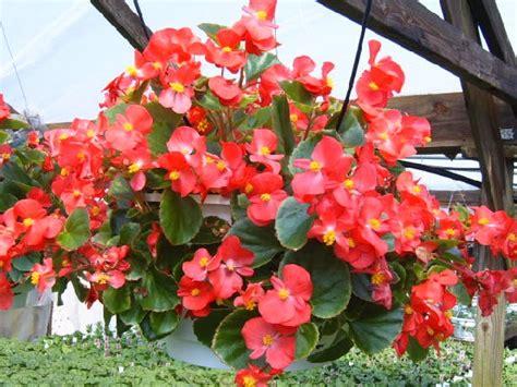 2013 01 20 beautifull flower