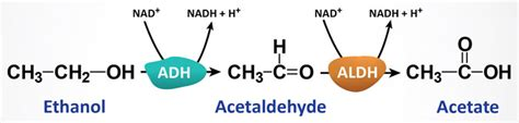 Acetaldehyde Detox by Ethanol Metabolism Acute And Chronic Toxicities