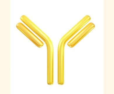 protein l hrp hrp conjugated chicken anti llama igg h l antibody