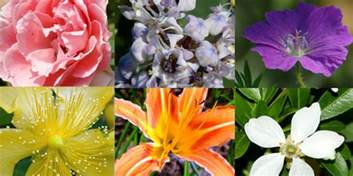 plants that don t need water 15 plants that don t need water groomed home