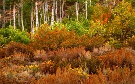 imagenes arboles otoño la imagen gorgeous oto 241 o 193 rboles y plantas wallpapers and