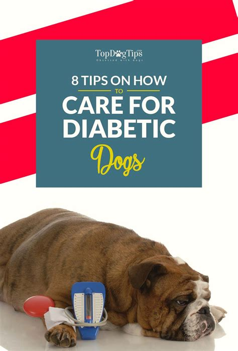 best food for diabetic dogs 8 expert tips on how to care for a diabetic