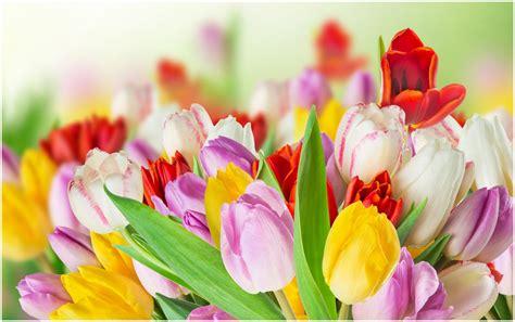 bunte blumen tulips colorful flowers hd wallpaper 9hd wallpapers