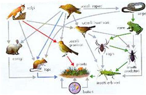 la catena alimentare degli animali q2sala11 this site is the bee s knees