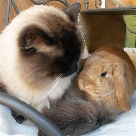 allevamento casa fabri cani gatti e conigli casa fabri allevamento e vendita
