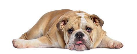 bored puppy create interesting content for boring niches cathy stucker the idea