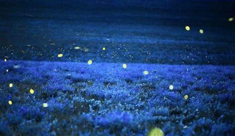 perch 233 le lucciole si illuminano la risposta di