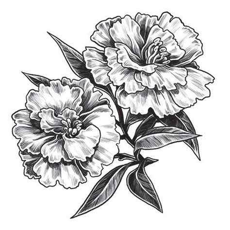 carnation flower tattoo carnation flower tattoos flowers ideas for review