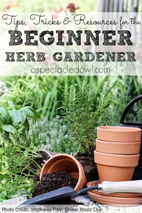 planting your own herb garden tips tricks resources to grow your own herb garden a