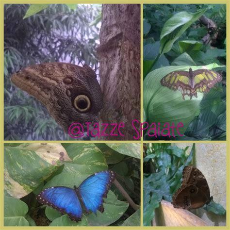 la casa delle farfalle montegrotto tazze spaiate da visitare con i bambini la casa delle